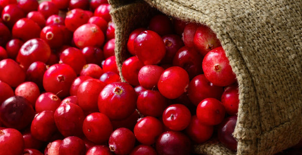 ||||cranberry-seed-oil-men-skin