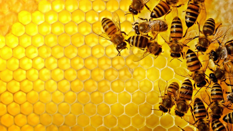 Beeswax and bees
