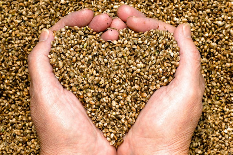 Hemp Seeds in Hand