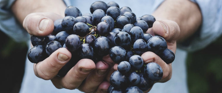 blueberry-holding-skin-benefits-anti-ageing