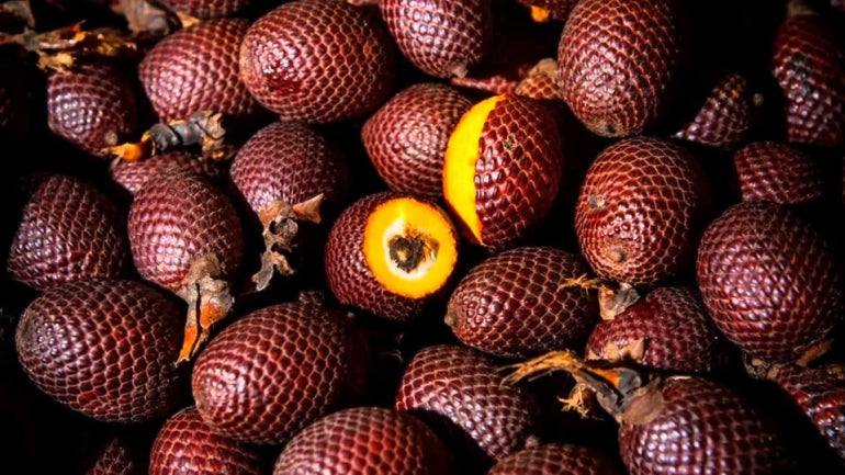 Buriti plant nut palm tree tropical plant