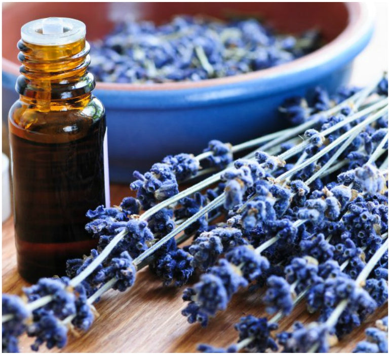 lavender oil with plant