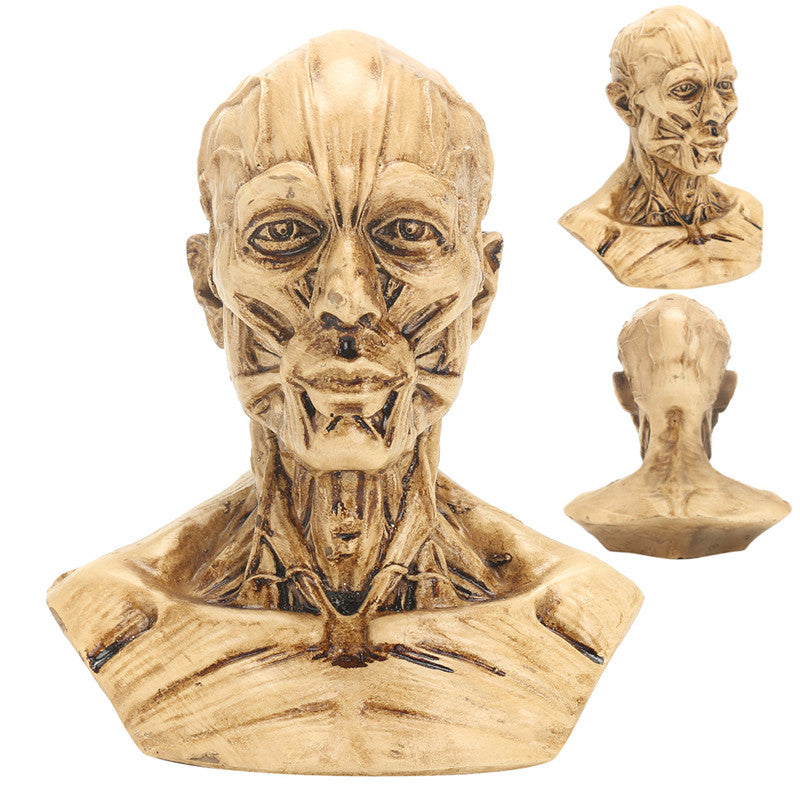 4 10cm Human Anatomical Anatomy Skull Head Muscle Bone Medical Model Home Decor""