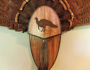 Turkey Fan & Beard Mount