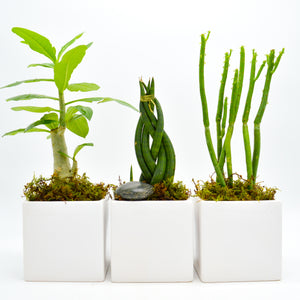 Mini Trio Plant Set