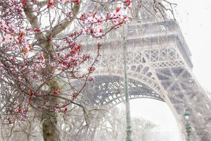 Blossom in Paris 24 X 32 Framed White