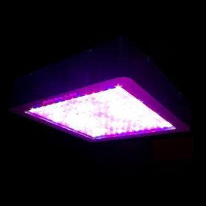 Apollo Horticulture 180/240/600/700W LED Grow Light