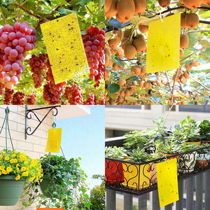 ECO Farm 20 Pack Dual-Sided Yellow Sticky Traps