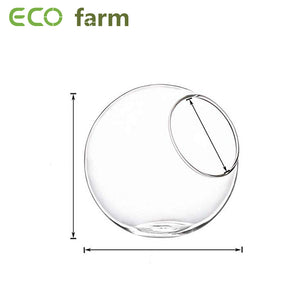 ECO Farm Round Glass DIY Air Plants Terrariums