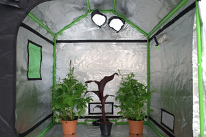 Eco Farm 5*5FT (60*60*72 Inch/ 150*150*180 CM) Tent Hydroponics Indoor Grow Tent Room