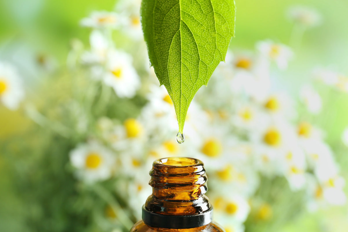The Mind and Body Benefits of Aromatherapy