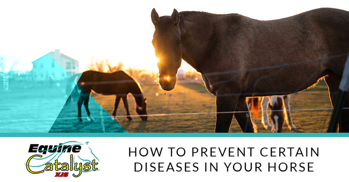 How To Prevent Certain Diseases In Your Horse