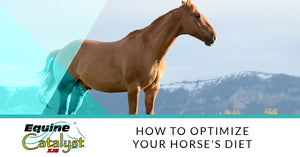 How To Optimize Your Horse's Diet