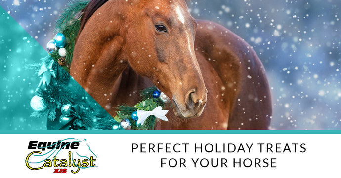 Perfect Holiday Treats For Your Horse