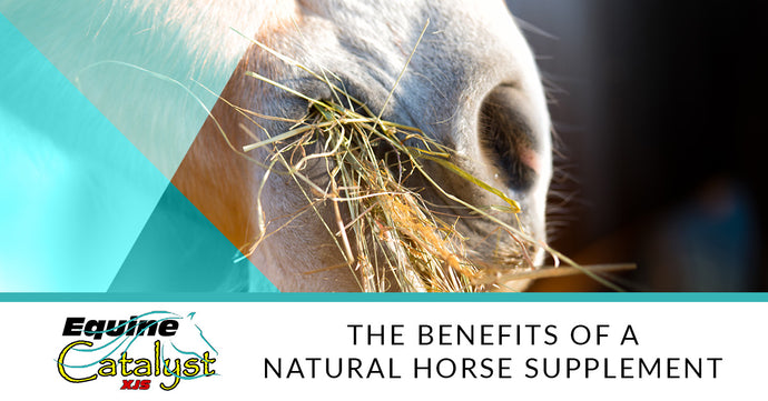 The Benefits Of A Natural Horse Supplement