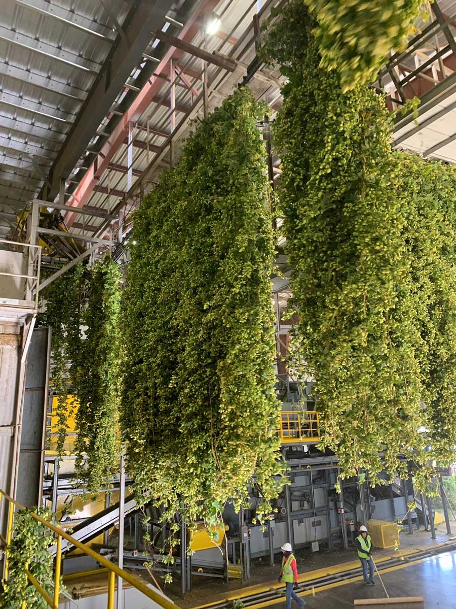 Beerfarm Hops at Yakima Valley Hops
