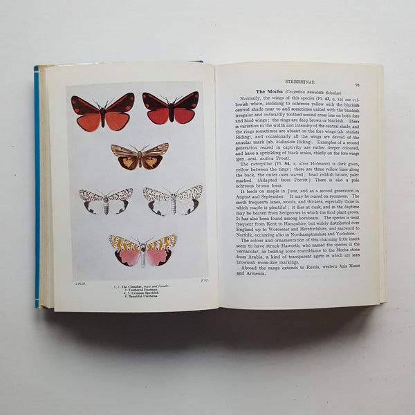 The Moths of the British Isles by Richard South