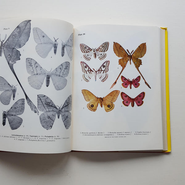 Emperor Moths of South and South-Central Africa by Elliott Pinhey