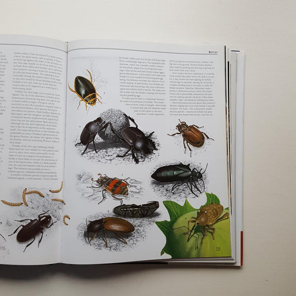 The New Encyclopedia of Insects and Their Allies by Christopher O'Toole (ed)