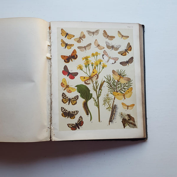 The Butterflies and Moths of Europe by Unspecified