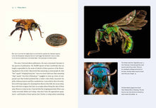 Load image into Gallery viewer, Our Native Bees