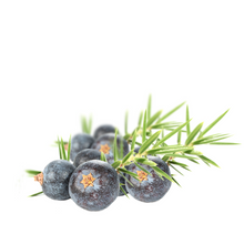 Juniper Berry Organic - Juniperus communis