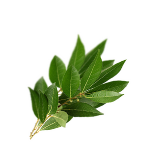 Laurel Leaf - Laurus nobilis