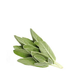Sage Organic - Salvia officinalis