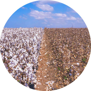 Cotton uses lot of water in their production
