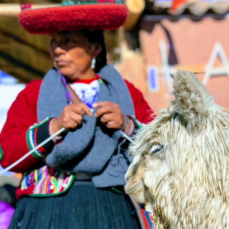 Peruvian indigenous lady knits while standing next to an alpaca in Cusco