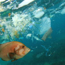 microplastics are harming our ocean