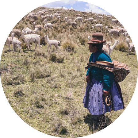 Woman looking at the alpacas in Peruvian High Lands