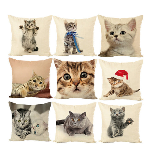 Collection housse de coussin chaton chat