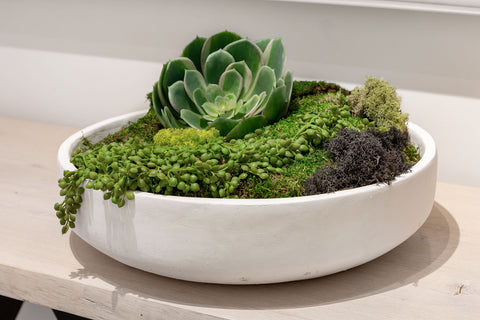 Signature Artifact Moss Bowl
