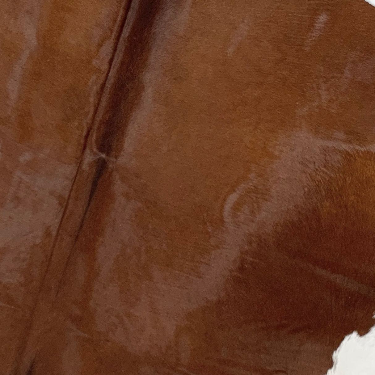 Brazilian Brown Cowhide with a White Belly (BRBNW170)