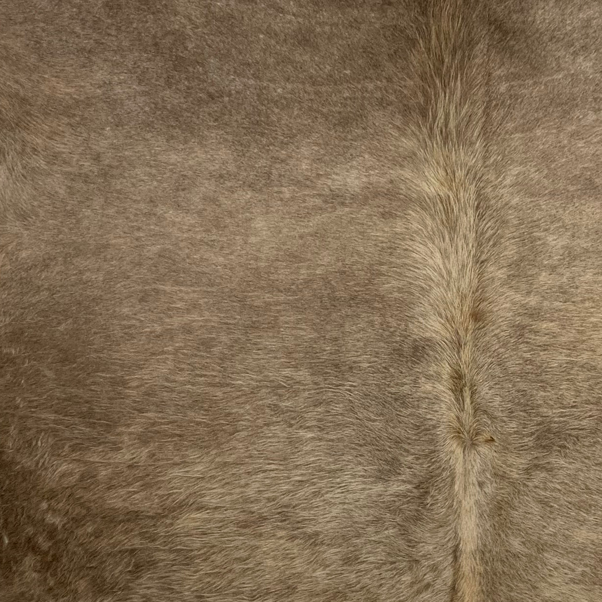 Brazilian Solid Medium Brown Cowhide (BRSL069)
