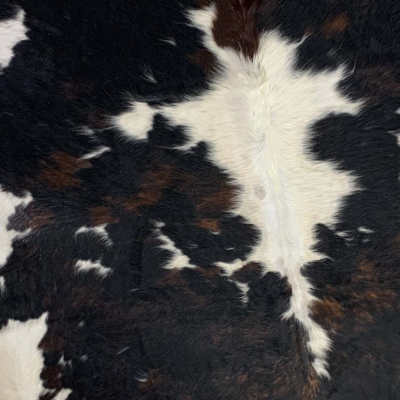 XL Colombian Dark Brindle Cowhide, off-white, black, brown  (COBR280)