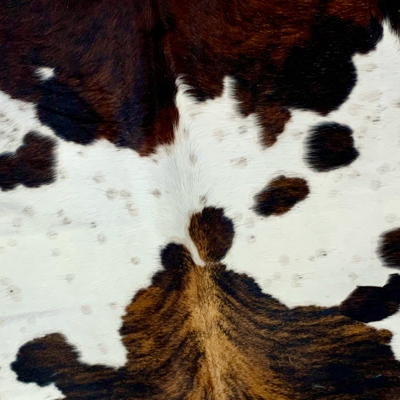 Large Colombian Tricolor Cowhide, white, with brown and black COTR112)