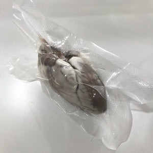 Preserved Sheep Heart