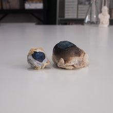 Load image into Gallery viewer, Preserved Sheep Eye and Cow Eye