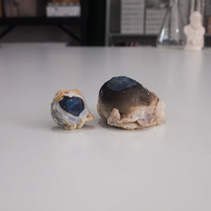 Preserved Sheep Eye and Cow Eye