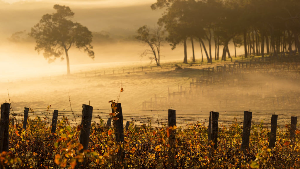 Top 10 Things To Do in Margaret River