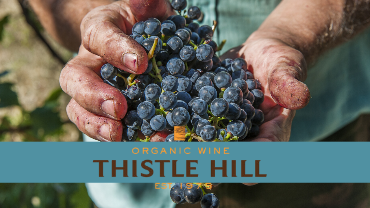 Thistle Hill Organic Wines