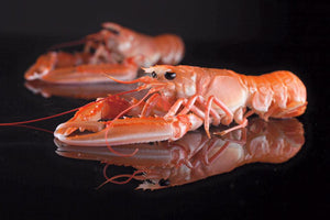 ${product_type Langoustines 500g (Cooked) The Berwick Shellfish Co.