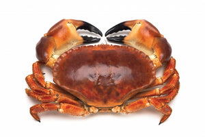 ${product_type Live Brown Crab ( 1 kg ) The Berwick Shellfish Co.