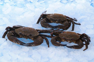 ${product_type Live Velvet Crab ( 1 kg Pack ) The Berwick Shellfish Co.