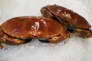 LIVE Brown Crab [ 1 kg ]