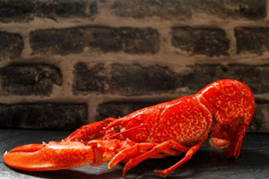 ${product_type Whole Cooked Lobster ( 500g / 750g / 1kg ) The Berwick Shellfish Co.