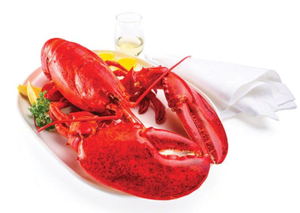 JUMBO Cooked Lobster  2-2.5 kg each