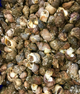 Whelk Meat ( 1kg )  | FROZEN |